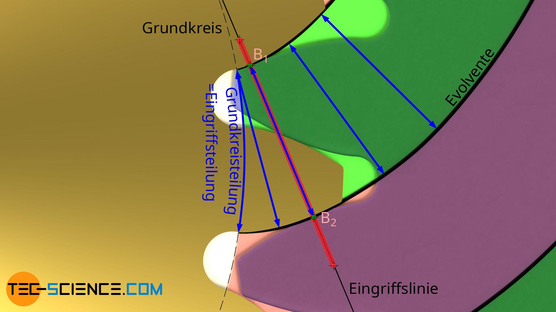 Eingriffsteilung (Grundkreisteilung)