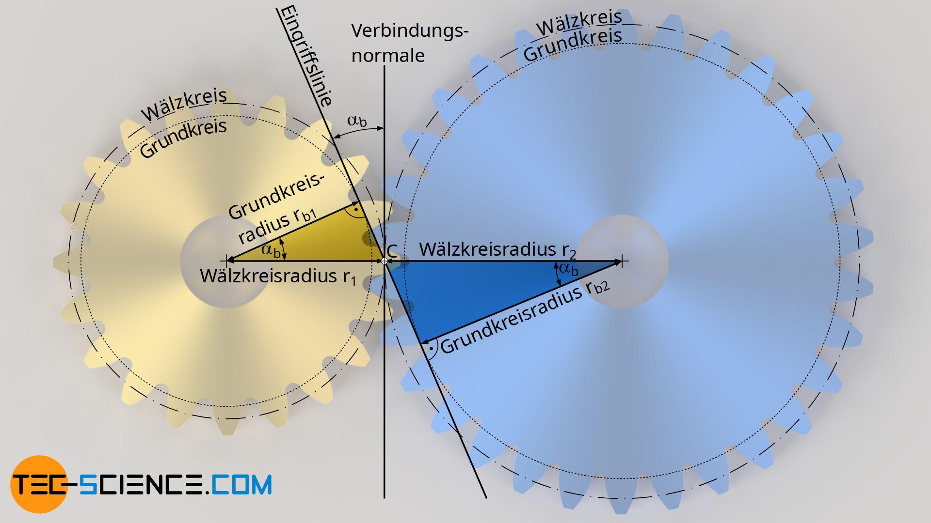 Zusammenhang zwischen Grundkreis und Wälzkreis