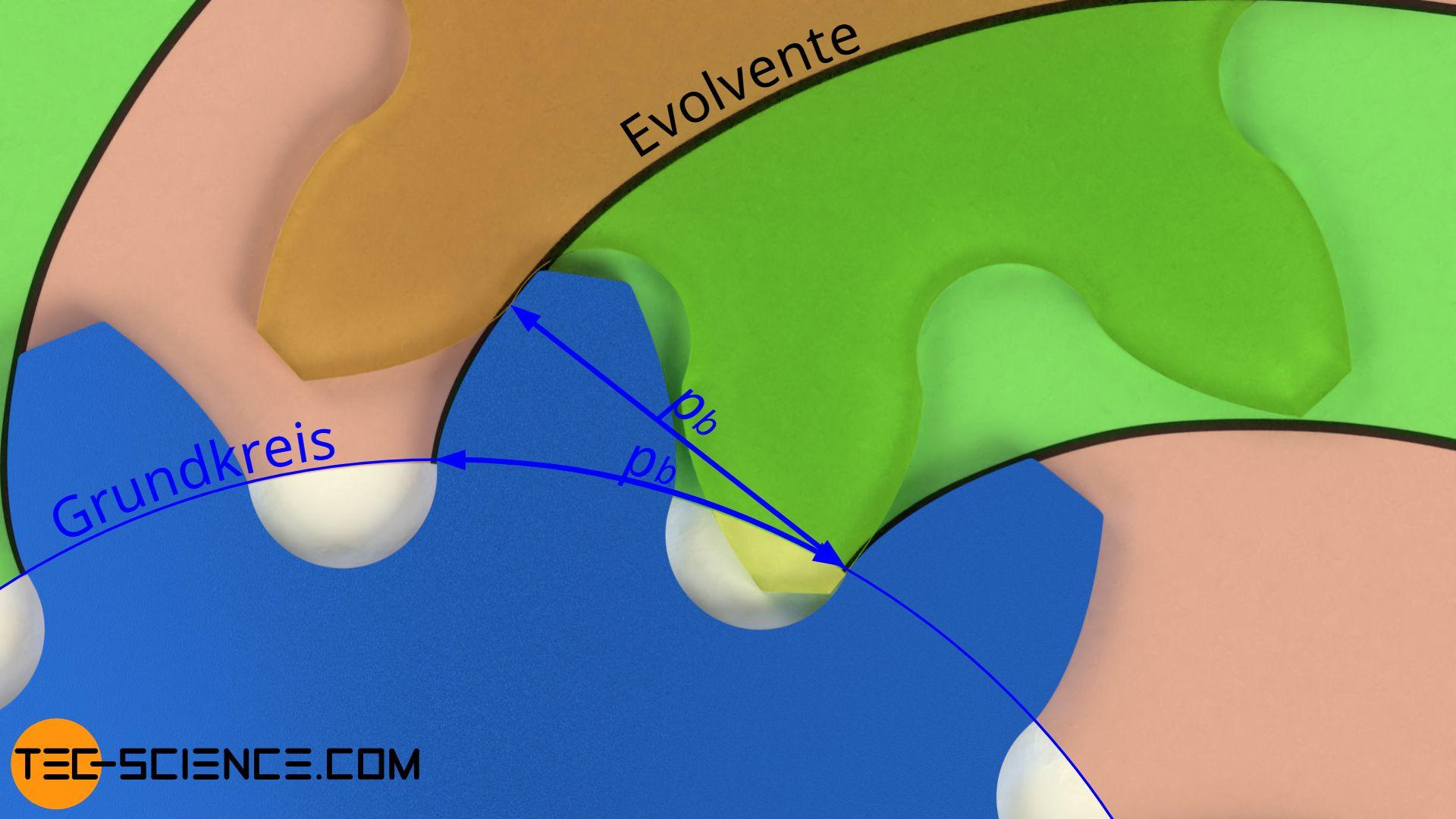 Eingriffsteilung zweier in Kontakt stehender Zahnräder