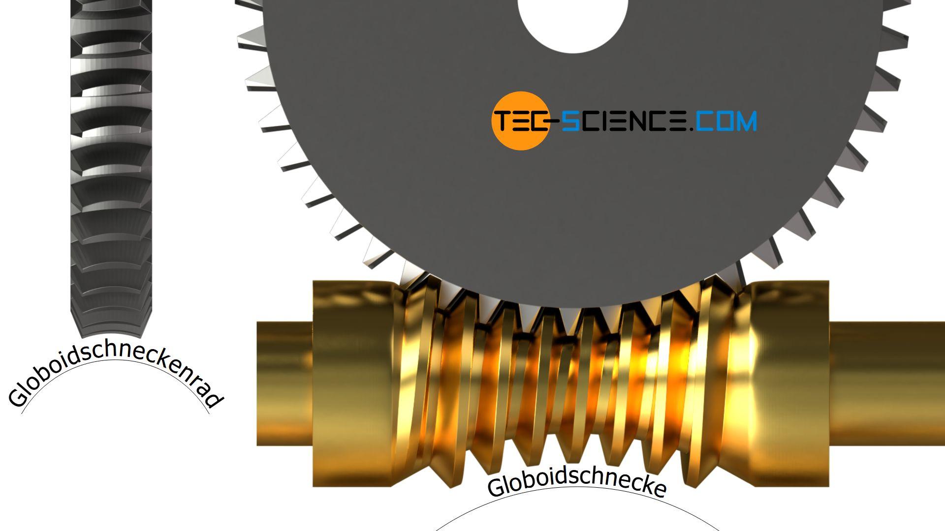 Globoidschnecke und Globoidschneckenrad (Globoidschneckengetriebe)