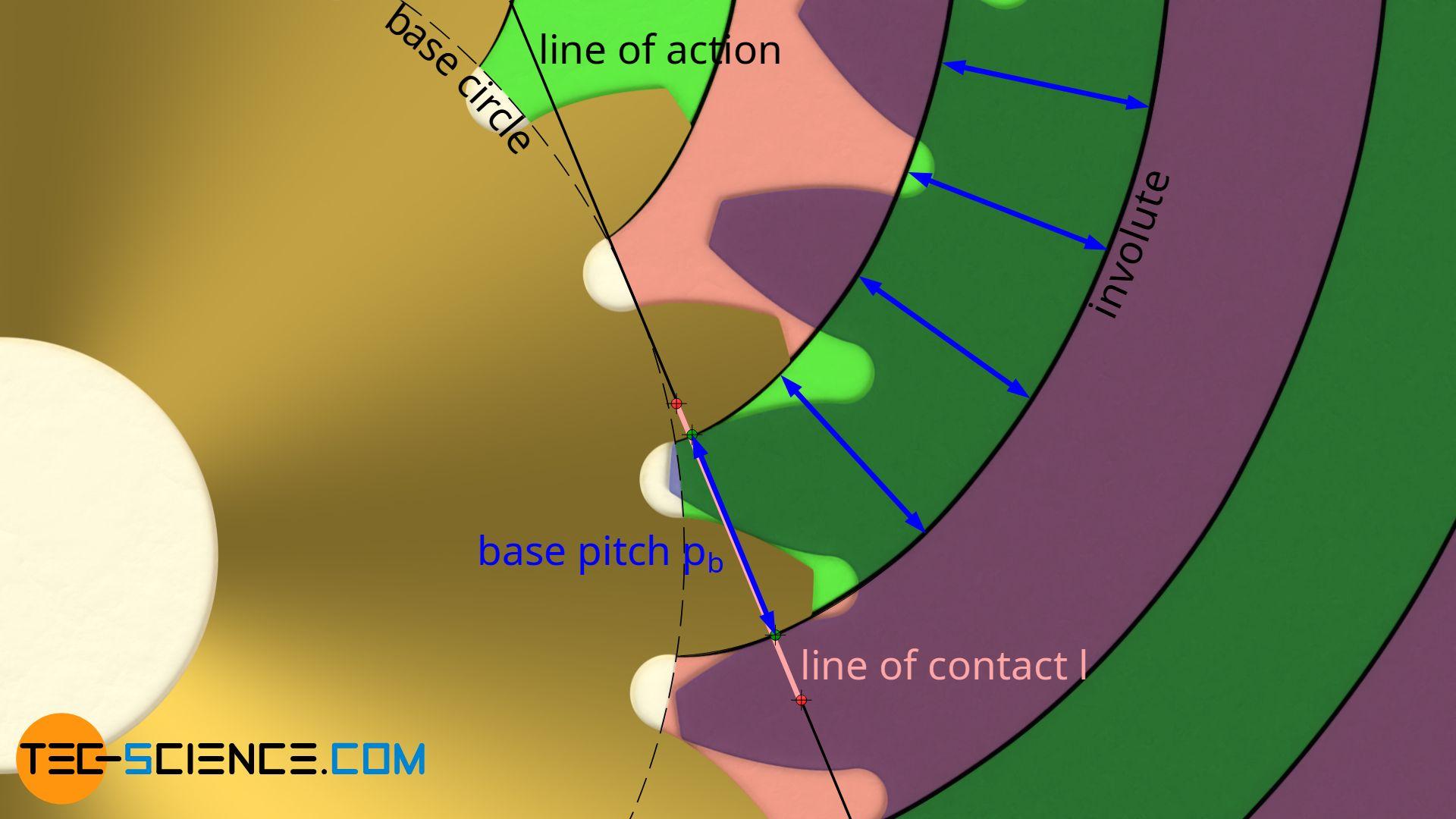 Base pitch