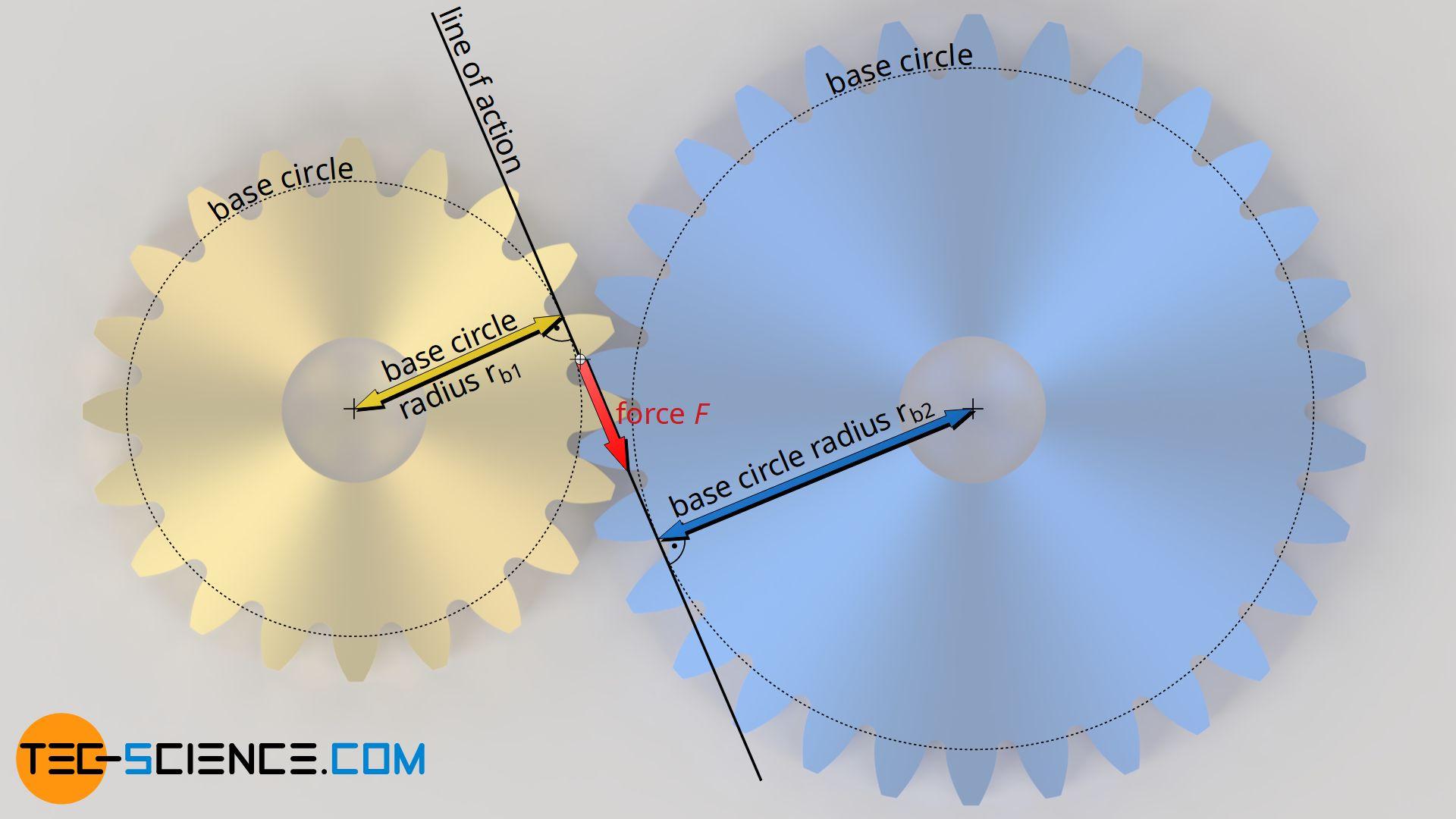 Force transmission during meshing