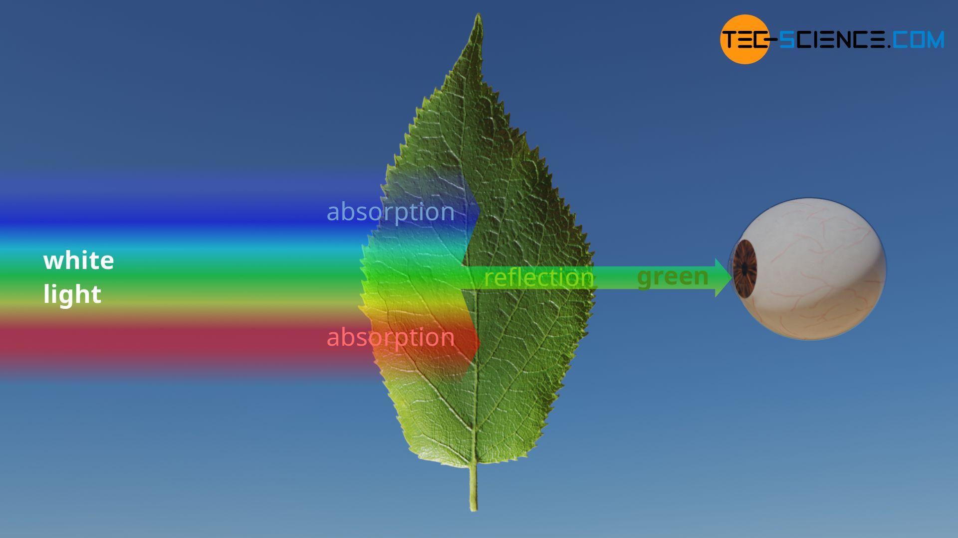 Green color impression of a leaf