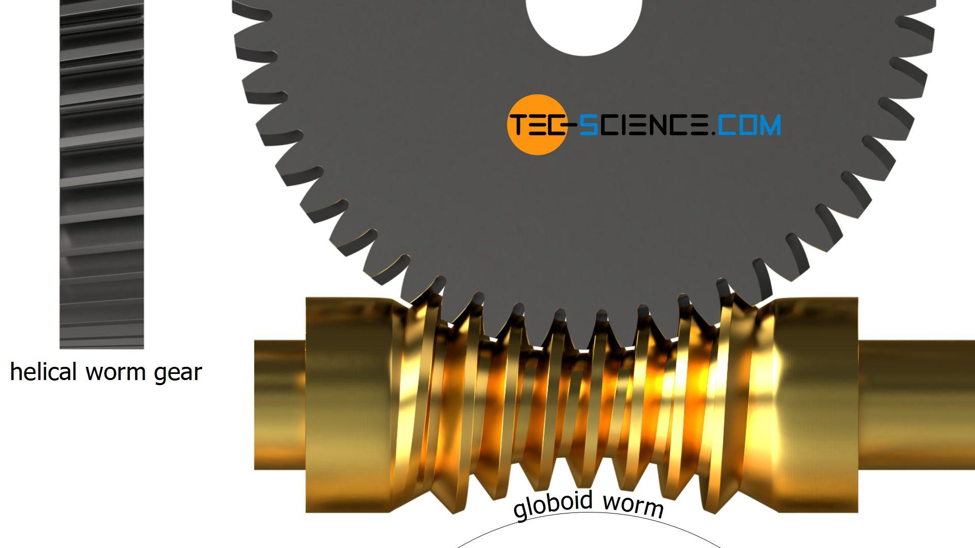 Globoid worm und helical worm gear