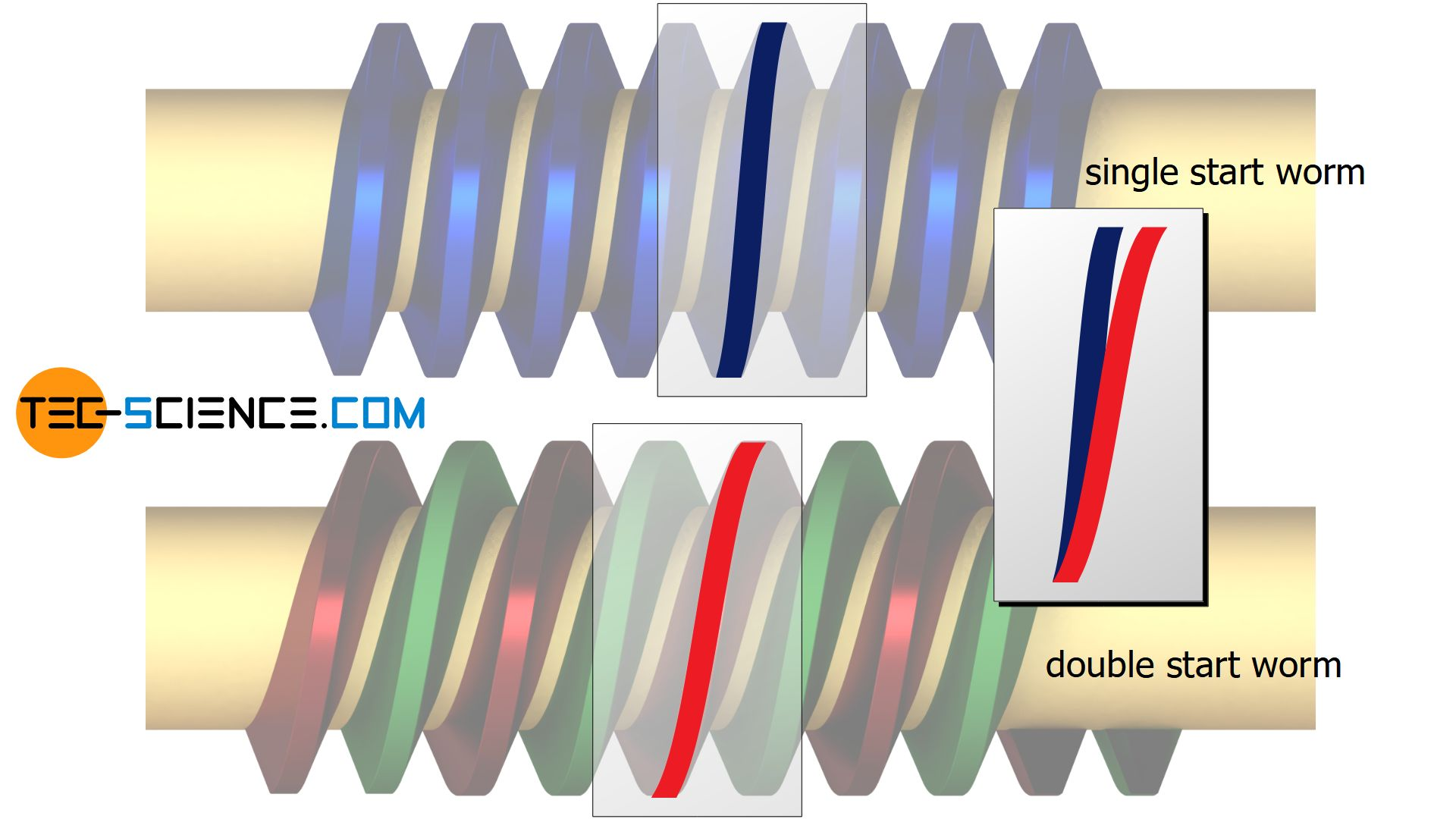 Comparison of the spiral angles between a single and a double start worm