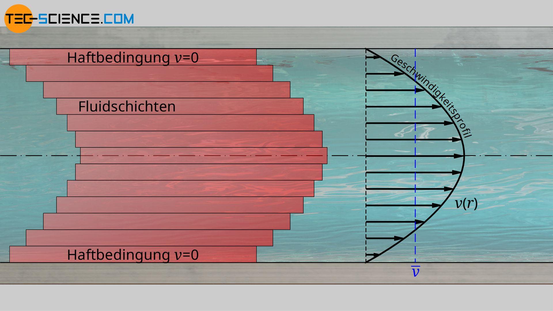 Parabolisches Geschwindigkeitsprofil einer laminaren Strömung in einem Rohr