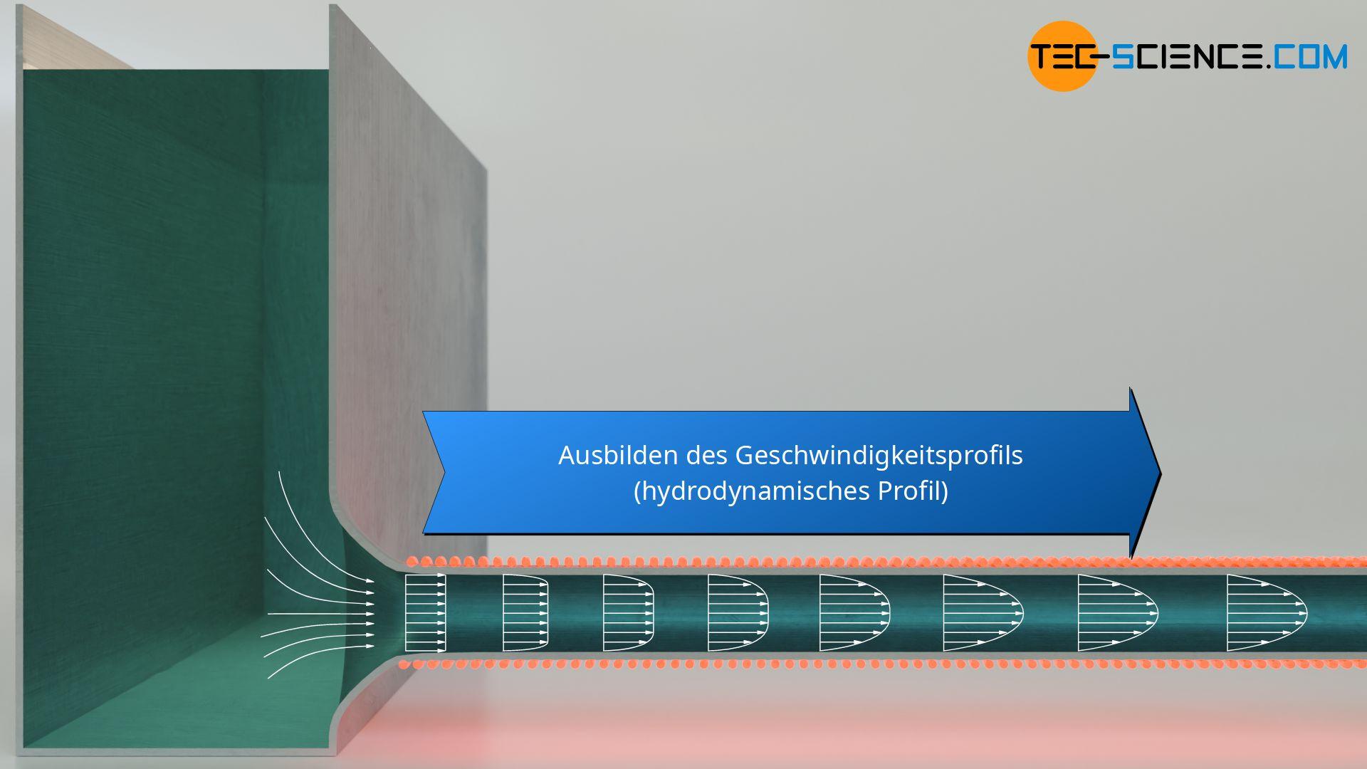 Ausbilden des Geschwindigkeitsprofils (hydrodynamisches Profil)