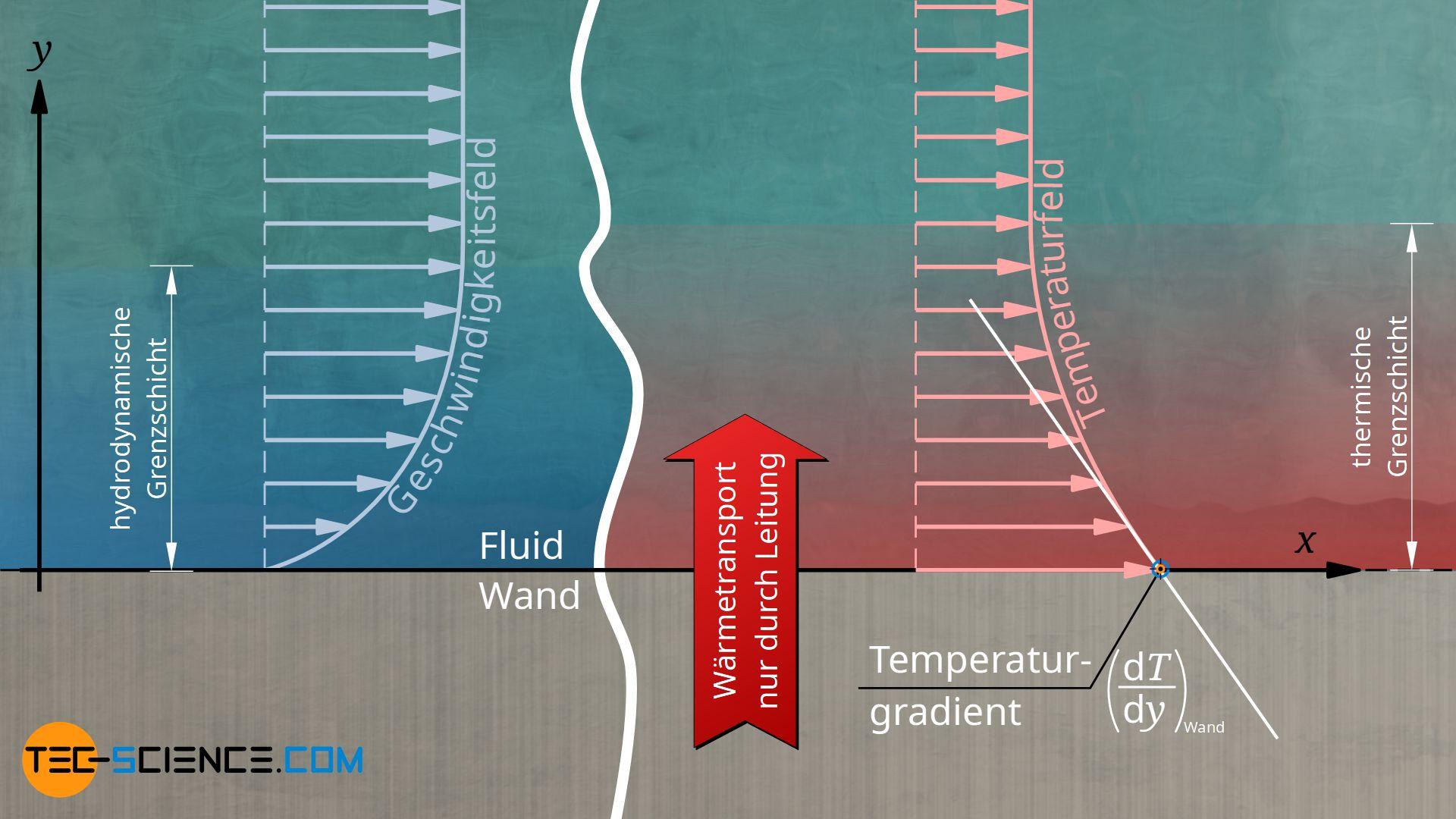 Einfluss der hydrodynamischen und thermischen Grenzschicht auf den konvektiven Wärmeübergang