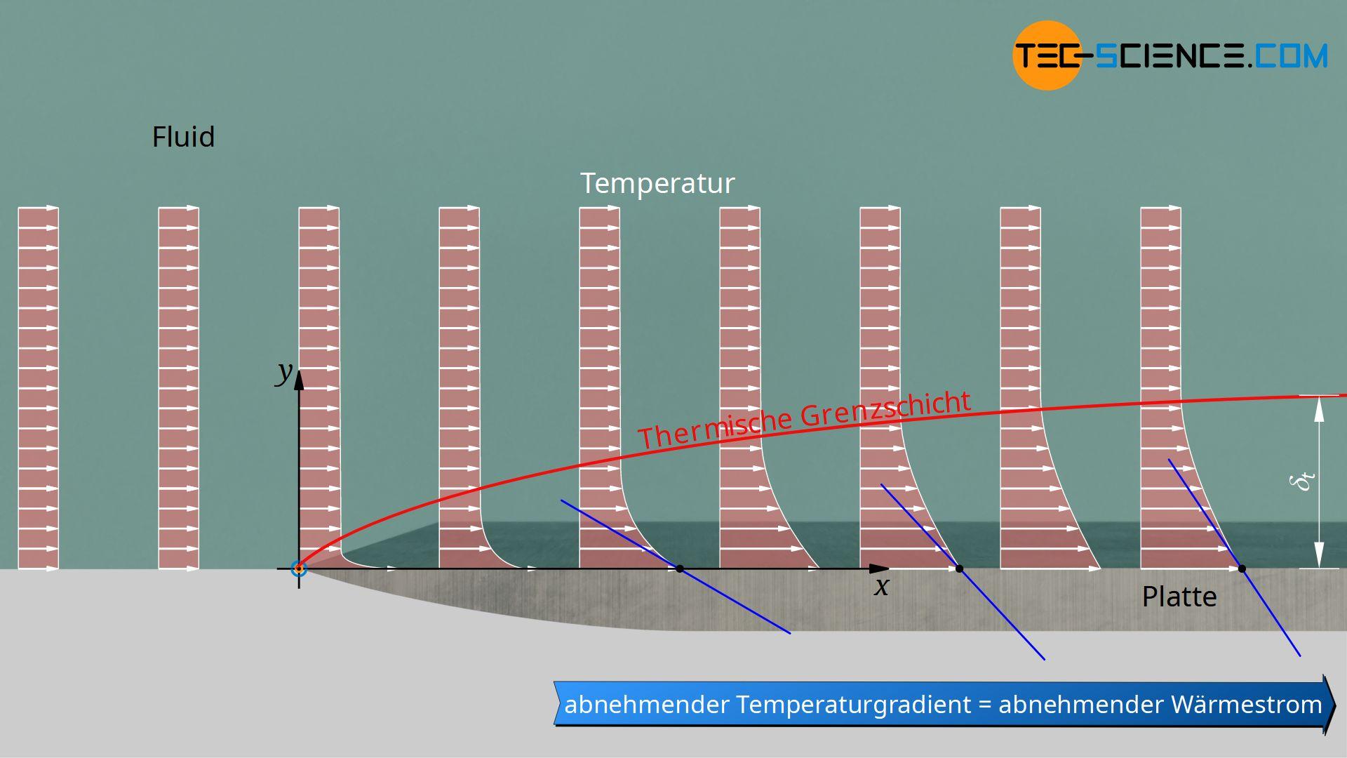 Thermische Grenzschicht einer isotherm beheizten Platte