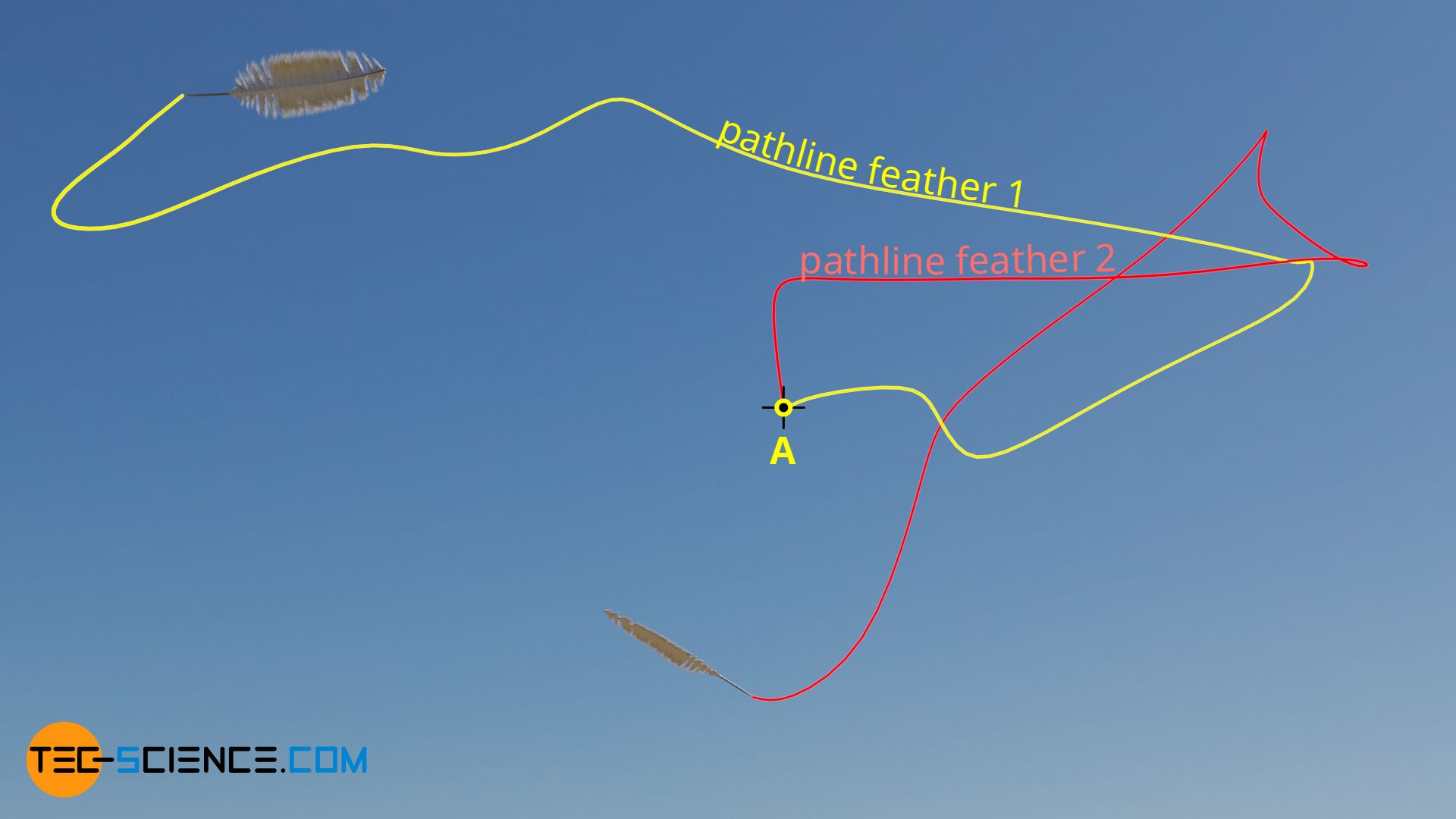 Pathlines (trajectories) of two feathers in an unsteady air flow (wind)