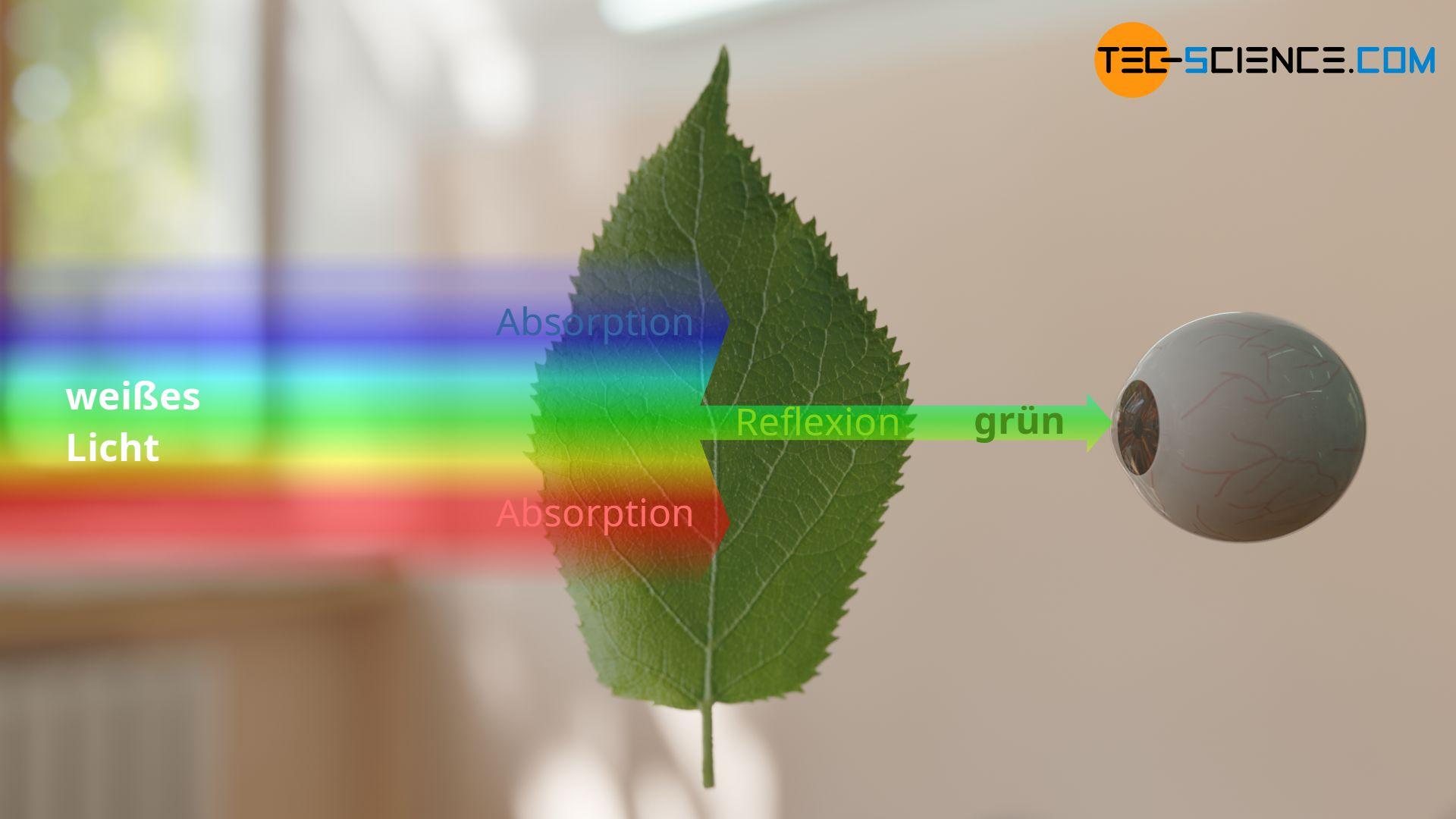 Farbwahrnehmung eines grünen Blattes